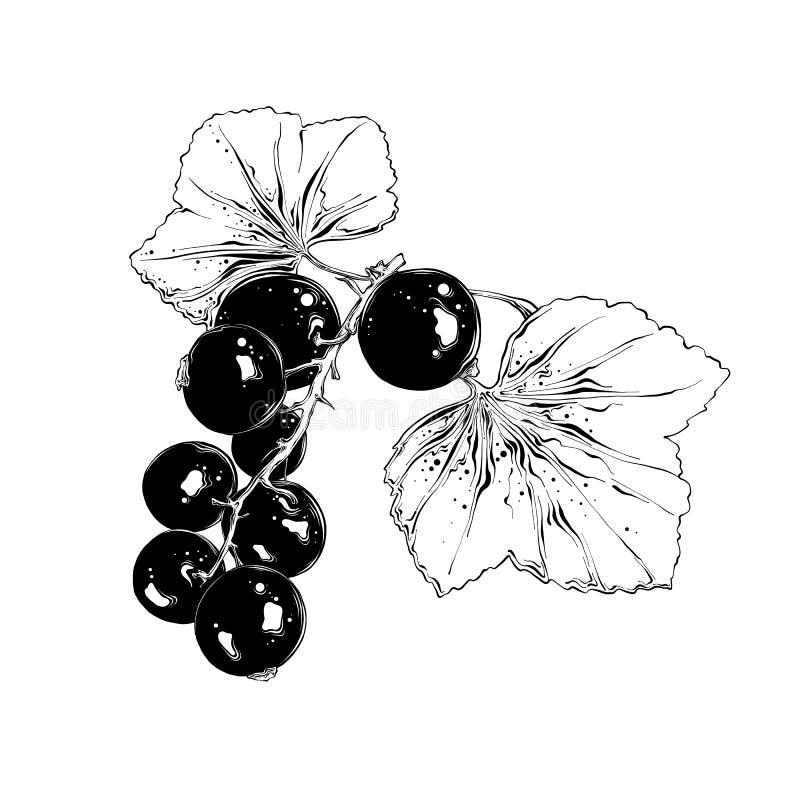 Hand getrokken schets van bes in zwarte Geïsoleerdj op witte achtergrond Trekkend voor affiches, decoratie en druk Vector vector illustratie