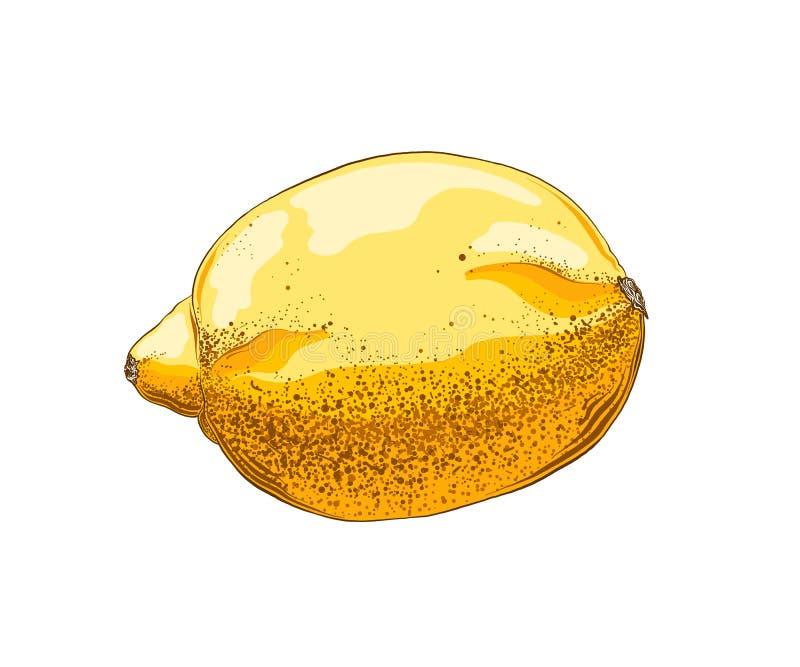 Hand getrokken schets van citroen in kleur Ge?soleerdj op witte achtergrond Trekkend voor affiches, decoratie en druk Vector royalty-vrije illustratie