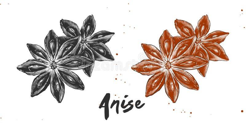 Hand getrokken schets van sterrenanijsplant in zwart-wit en kleurrijk Gedetailleerde vegetarische voedseltekening stock illustratie