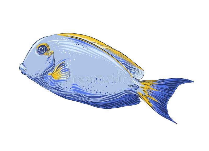 Hand getrokken schets van vissen in kleur Ge?soleerdj op witte achtergrond Trekkend voor affiches, decoratie en druk Vector royalty-vrije illustratie