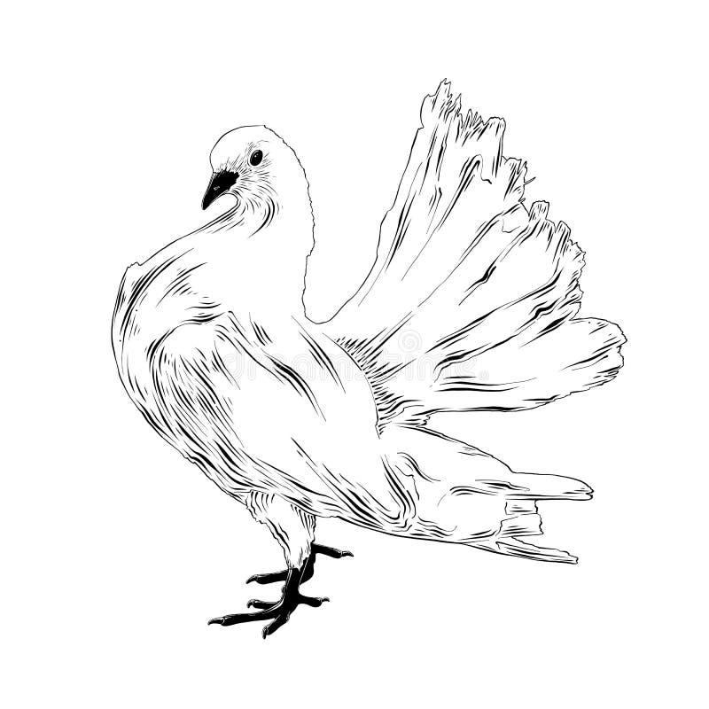 Hand getrokken schets van witte die duif in zwarte op witte achtergrond wordt geïsoleerd De gedetailleerde uitstekende tekening v royalty-vrije illustratie