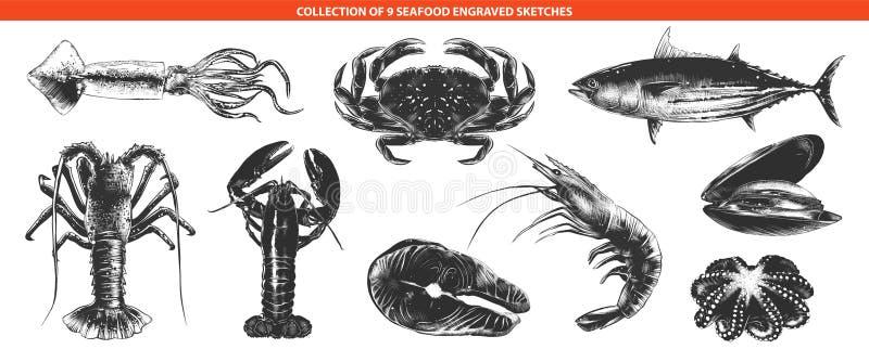 Hand getrokken schetsen van in zwart-wit geïsoleerd op witte achtergrond De gedetailleerde uitstekende tekening van de houtdrukst vector illustratie