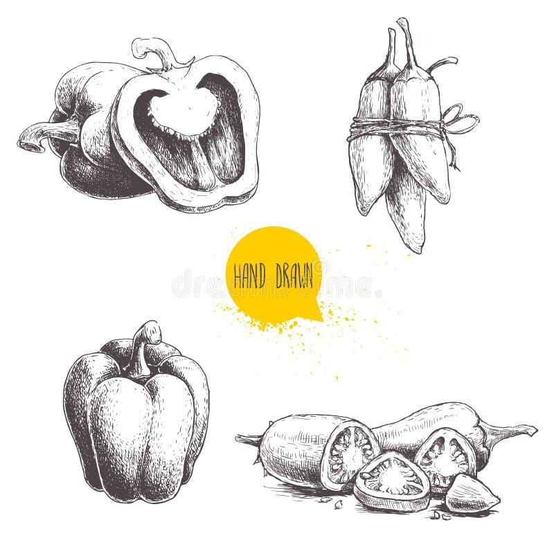 Hand getrokken schetsinzameling van verschillende types van peper De samenstelling van klok paprika's, gesneden hete Spaanse pepe vector illustratie