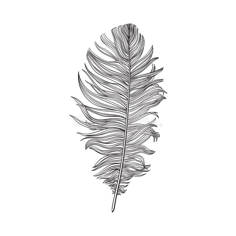 Hand getrokken smoth zwart-witte duifvogelveer, vectorillustratie stock illustratie