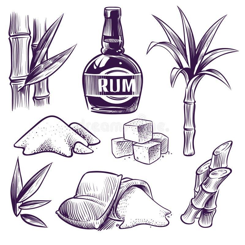 Hand getrokken suikerriet Suikerriet zoete bladeren, de stelen van de suikerinstallatie, landbouwbedrijfoogst, rumglas en fles Ui royalty-vrije illustratie