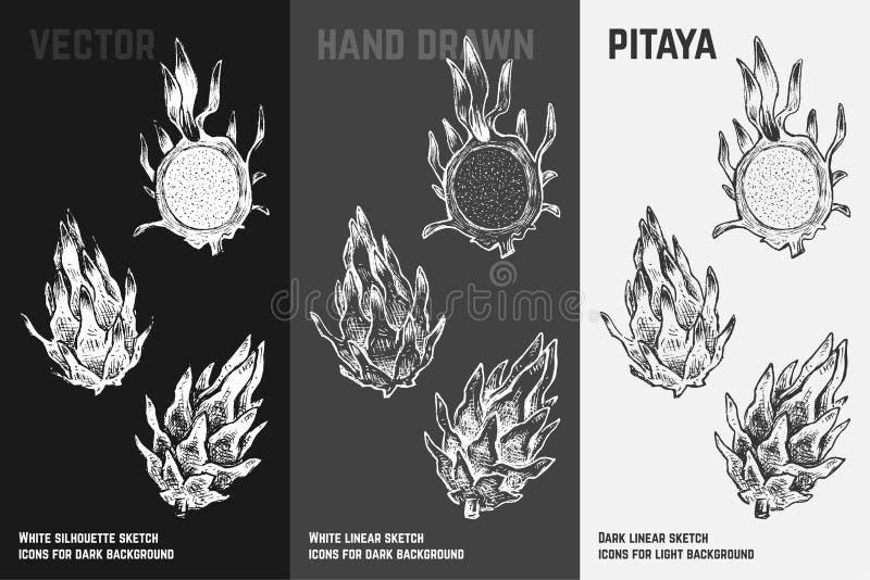 Hand getrokken van draakfruit of pitaya vectorpictogrammen vector illustratie
