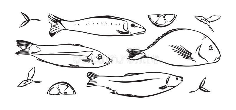 Hand getrokken vectorillustratie van vissen met citroen en kruiden Zwarte op witte achtergrond wordt geïsoleerd die vector illustratie