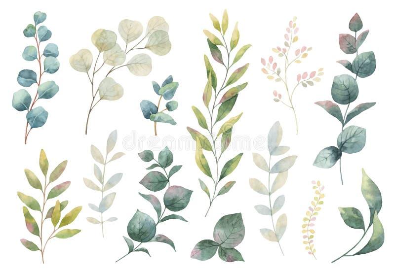 Hand getrokken vectorwaterverfreeks kruiden, wildflowers royalty-vrije illustratie