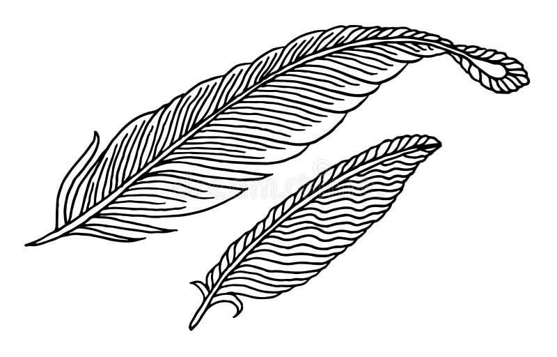 Hand getrokken veren stock illustratie