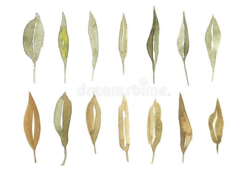 Hand getrokken waterverfbladeren geplaatst die op wit worden geïsoleerd Vastgestelde installatieselementen Groen De stijl van de  royalty-vrije illustratie