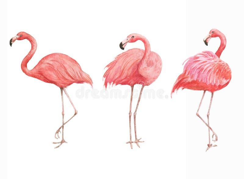 Hand getrokken waterverfillustratie met mooie roze flamingo royalty-vrije stock afbeelding