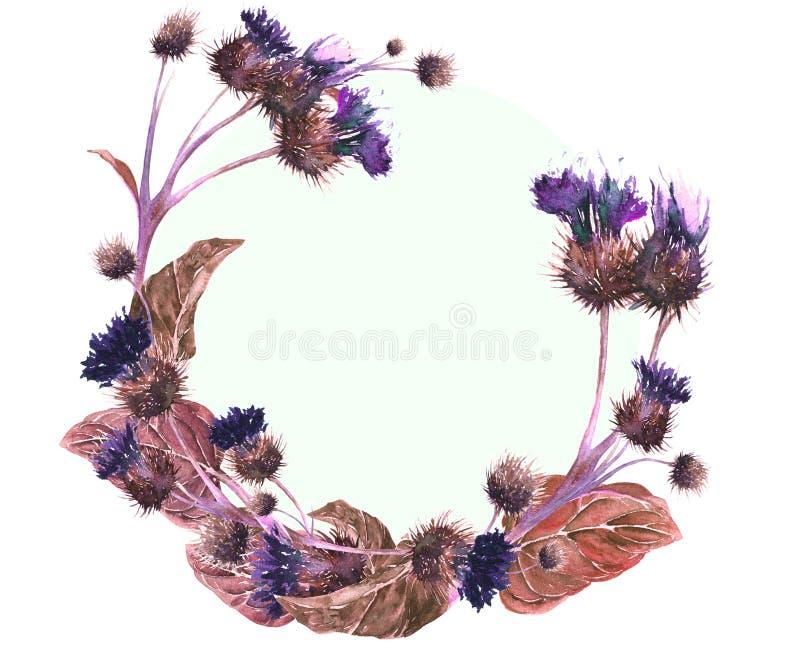 Hand getrokken waterverfkroon van een kleurrijke distel van de neon violette, bruine en rode weide Botanische uitstekende waterve royalty-vrije illustratie