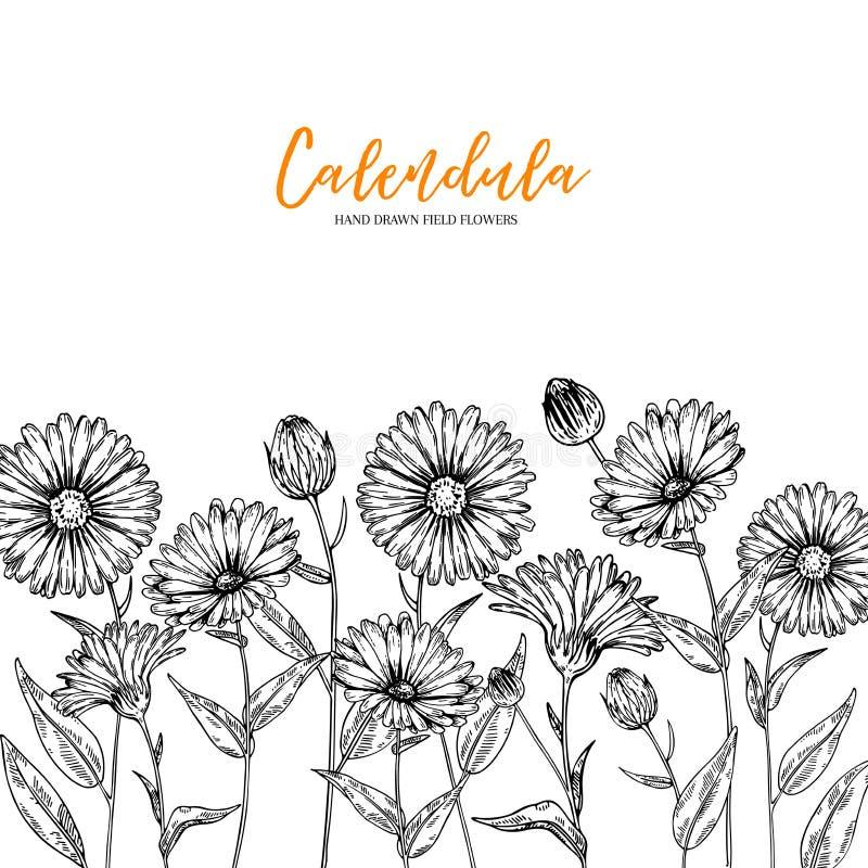 Hand getrokken wilde hooibloemen De bloem van Calendula Medisch kruid Wijnoogst gegraveerd art. Donkere landhuisachtergrond Goed  stock illustratie