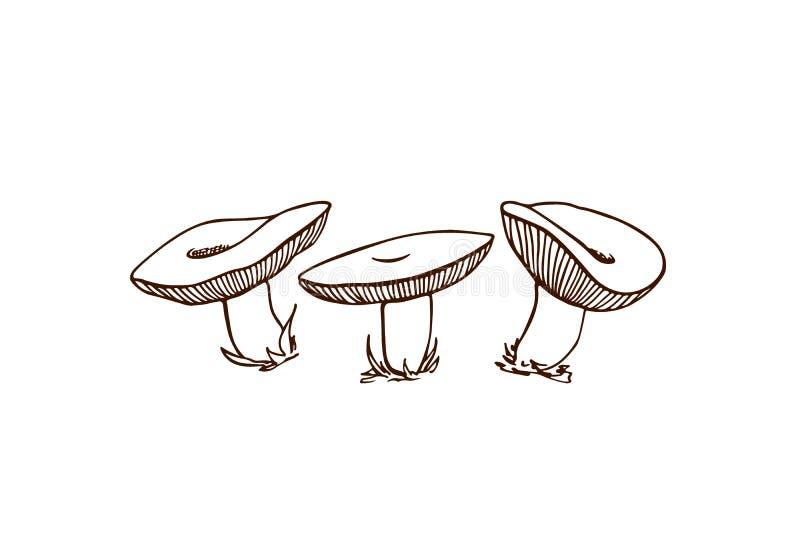 Hand getrokken wilde paddestoelen royalty-vrije illustratie