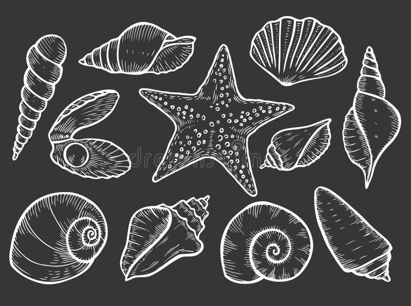 Hand Getrokken Zeeschelp vector illustratie