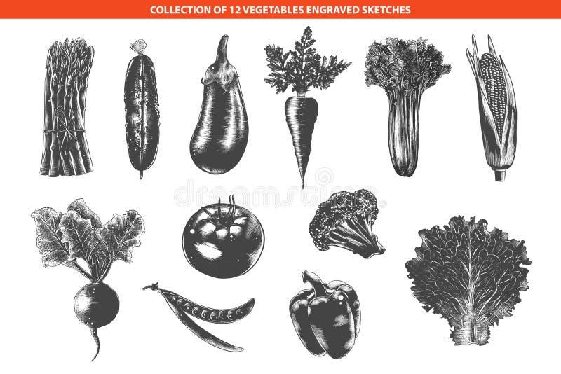 Hand getrokken zwart-wit die schetsen op witte achtergrond worden geïsoleerd Gedetailleerde uitstekende houtdruktekening royalty-vrije illustratie
