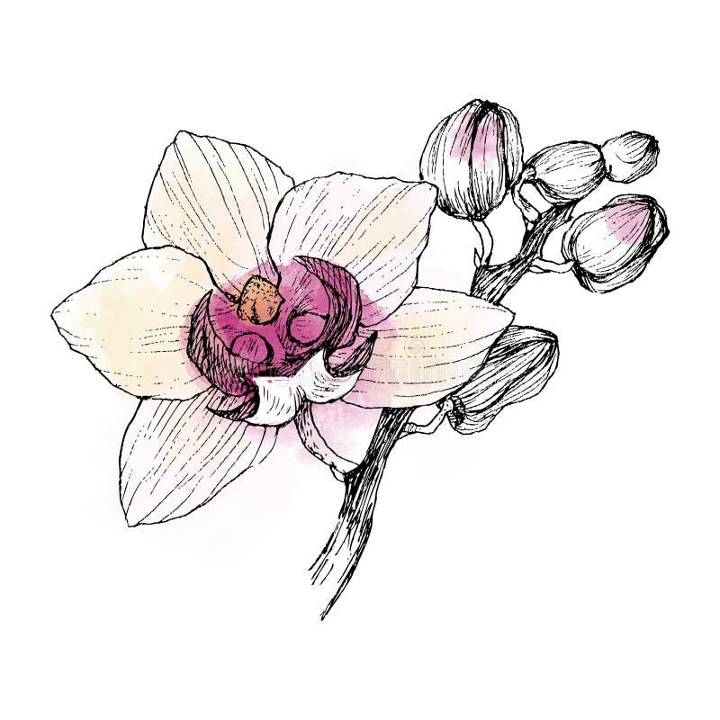 Hand getrokken zwarte overzichtsorchidee op een witte geïsoleerde achtergrond Hoogst gedetailleerde illustratie met waterverf Moo stock illustratie