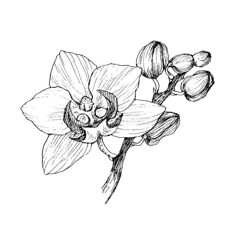 Hand getrokken zwarte overzichtsorchidee op een witte geïsoleerde achtergrond Hoogst gedetailleerde vectorillustratie r royalty-vrije illustratie