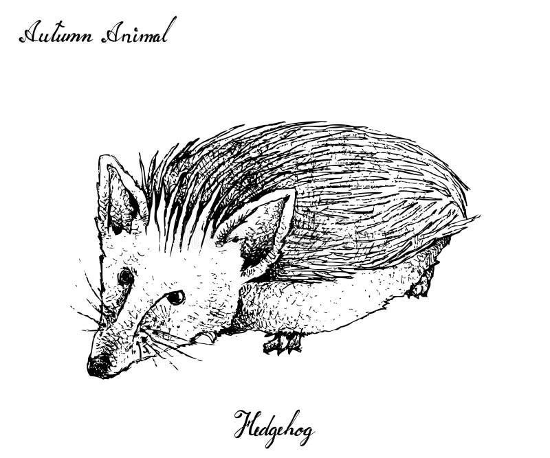 Hand gezeichnet von Autumn Hedgehogon White Background lizenzfreie abbildung