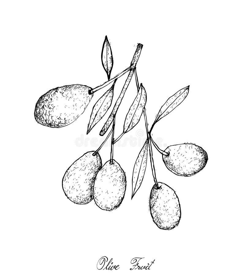 Hand gezeichnet von den grünen Oliven auf weißem Hintergrund stock abbildung