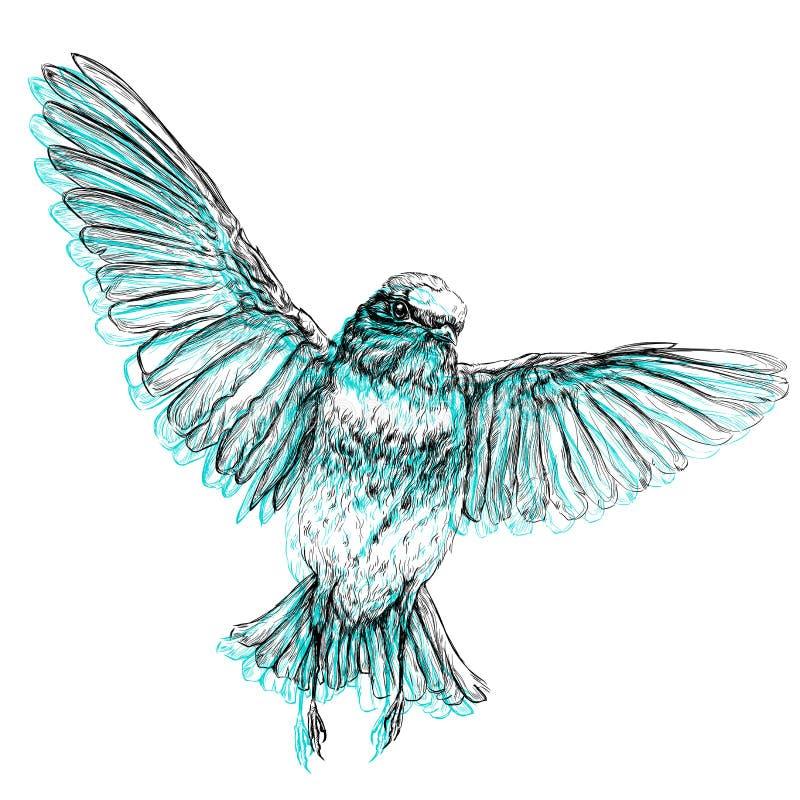 Hand gezeichnete Artvektorillustration des Vogels stock abbildung