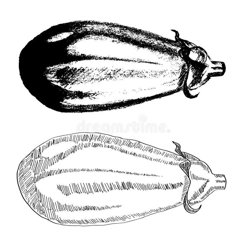 Hand gezeichnete Aubergine vektor abbildung
