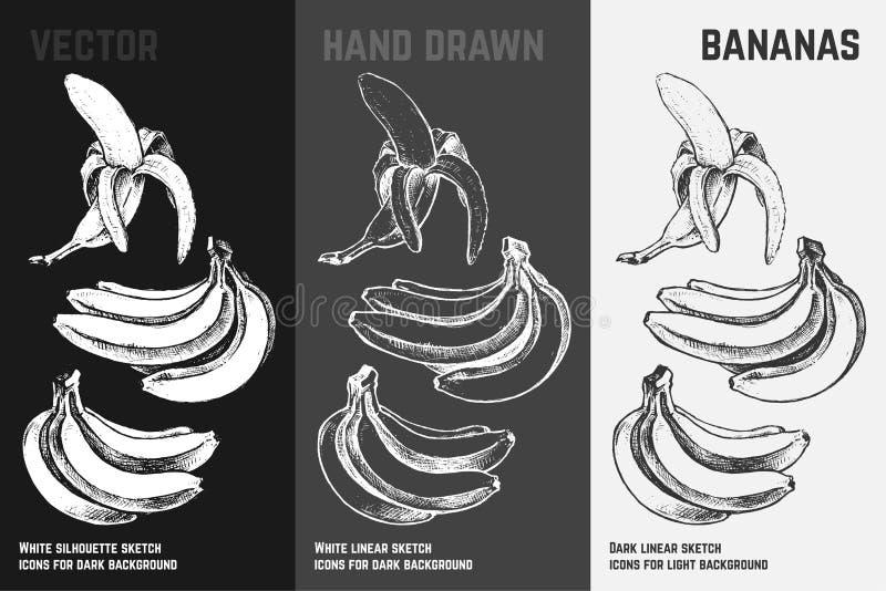Hand gezeichnete Bananen Fruchtskizzen-Vektorsatz vektor abbildung