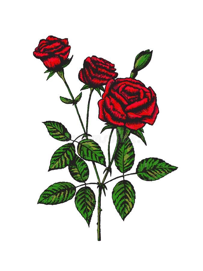 hand gezeichnete blume bunte rose vektor abbildung illustration von liebe valentine 93536074. Black Bedroom Furniture Sets. Home Design Ideas