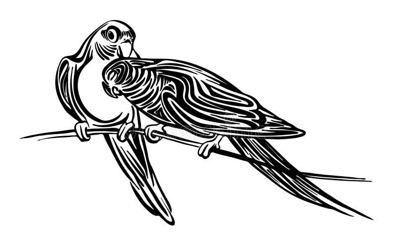 Hand gezeichnete Entwurfsskizze mit zwei Wellensittichpapageien Vektorvogelschwarz-Tintenzeichnung lokalisiert auf weißem Hinterg vektor abbildung