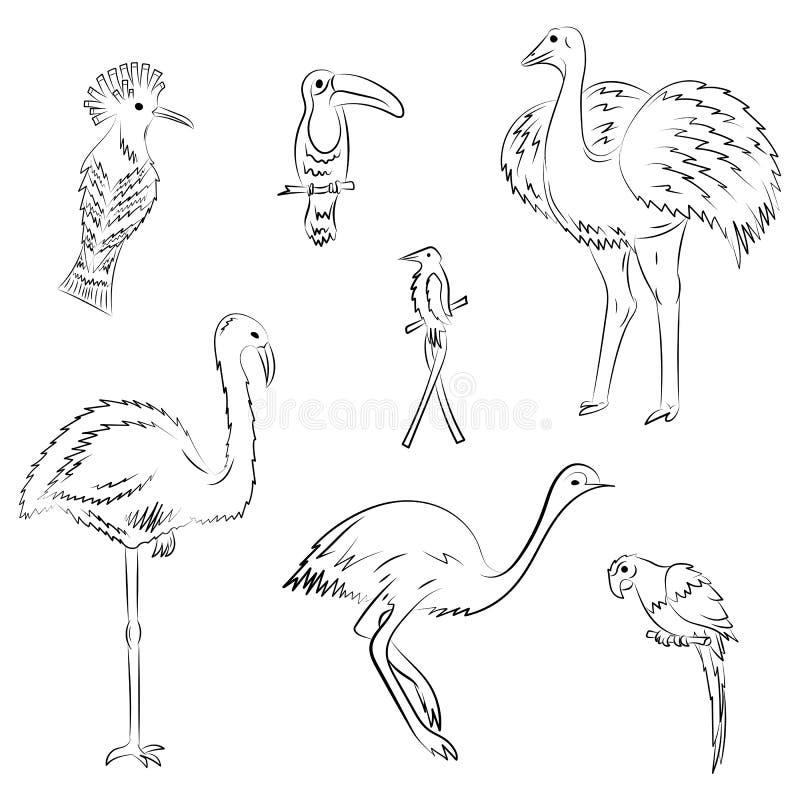 Hand gezeichnete exotische tropische Vögel Gekritzel-Zeichnungen des Papageien, des Straußes, des Emus, des Kolibris, des Hoopoe  lizenzfreie abbildung
