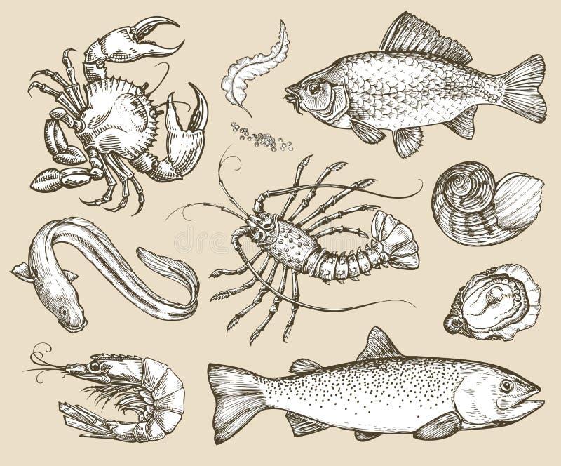 Hand gezeichnete gesetzte Meeresfrüchte der Skizze Auch im corel abgehobenen Betrag vektor abbildung