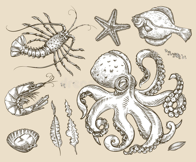 Hand gezeichnete gesetzte Tiere der Skizze See, Meeresfrüchte Auch im corel abgehobenen Betrag stock abbildung