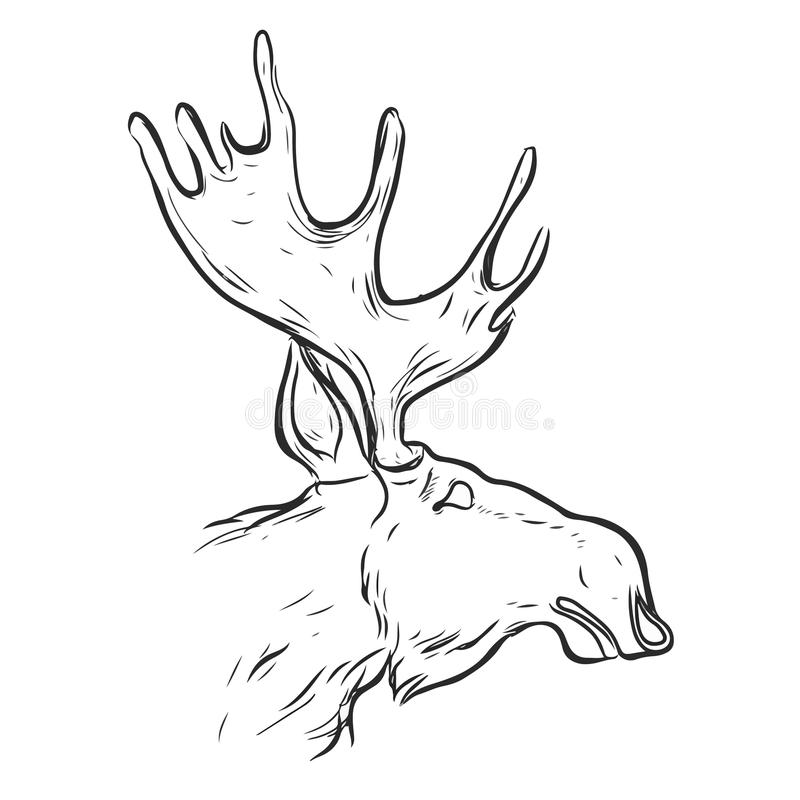 Hand gezeichnete grafische Elche lizenzfreie abbildung