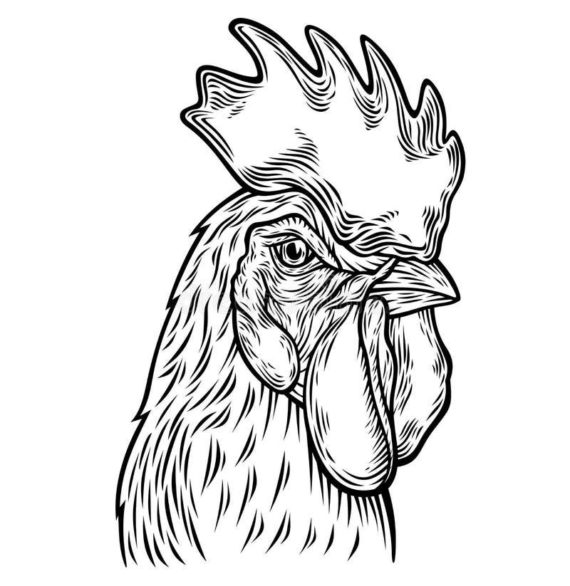 Hand gezeichnete Hahnkopfillustration lizenzfreie abbildung
