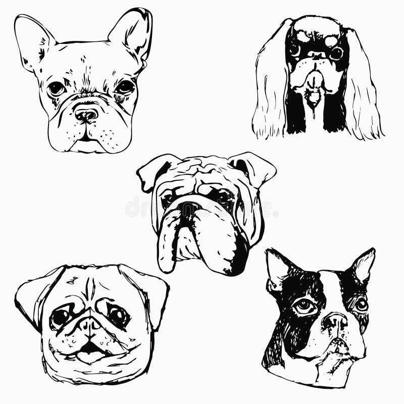 Hand gezeichnete Hundeporträts auf weißem Hintergrund lizenzfreie abbildung