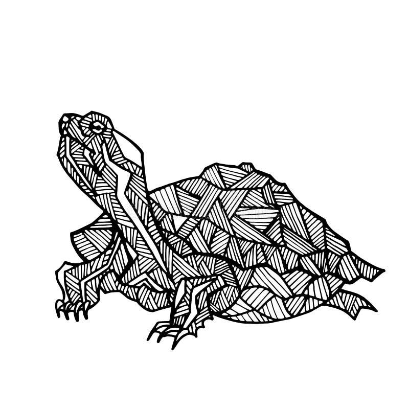 Hand Gezeichnete Illustration Der Schildkröte Für Die Färbung Vektor ...