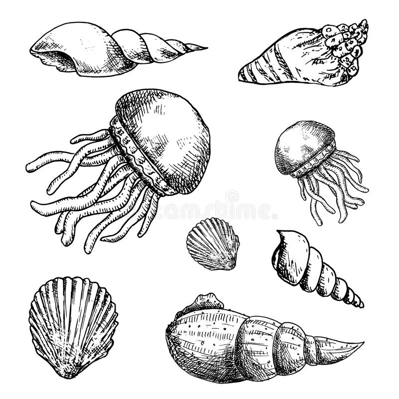 Hand gezeichnete Meeresflora und -fauna-Gekritzel eingestellt Skizzenartikonen Decorati lizenzfreie abbildung