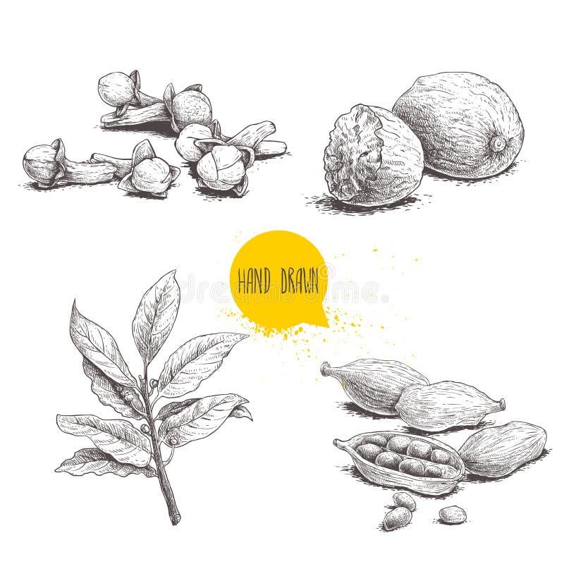 Hand gezeichnete Skizzengewürze eingestellt Lorbeerblätter verzweigen sich, Muskatnüsse, Kardamom und Nelken Kraut-, Würz- und Ge stock abbildung