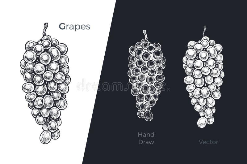 Hand gezeichnete Trauben Gravierter Skizzenvektorentwurf stock abbildung