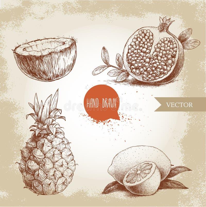 Hand gezeichnete tropische Früchte der Skizzenart eingestellt Scheibe der Zitrone mit Blatt, Hälfte der Kokosnuss, Ananas und Häl lizenzfreie abbildung