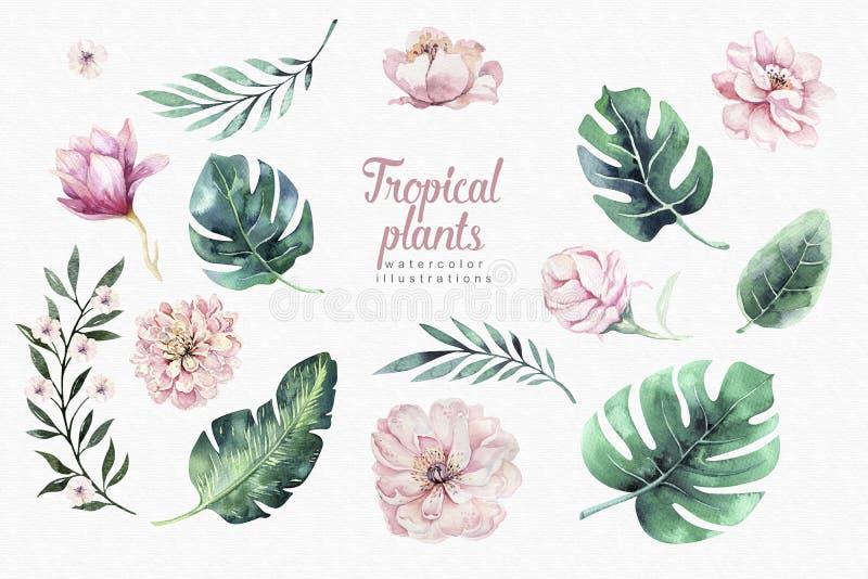 Hand gezeichnete tropische V?gel des Aquarells stellten vom Flamingo ein Exotische rosafarbene Vogelillustrationen, Dschungelbaum lizenzfreie abbildung