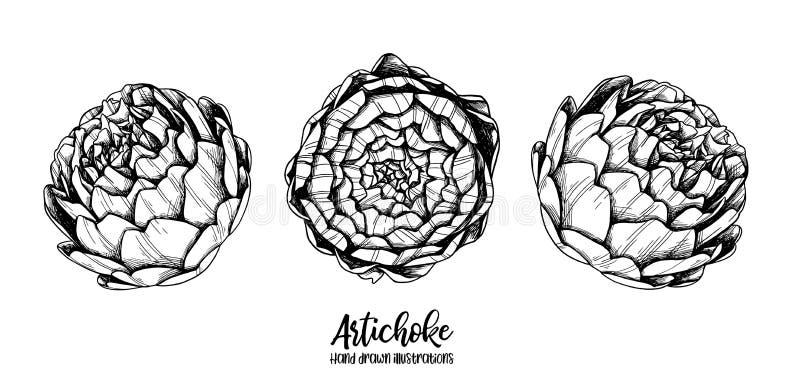 Hand gezeichnete Vektorillustrationen - Artischocke gemüse Blumend vektor abbildung