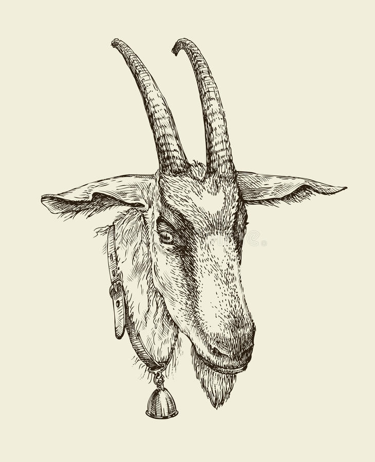 Hand Gezeichnete Ziege Skizzieren Sie Ein Vieh Auch Im Corel ...