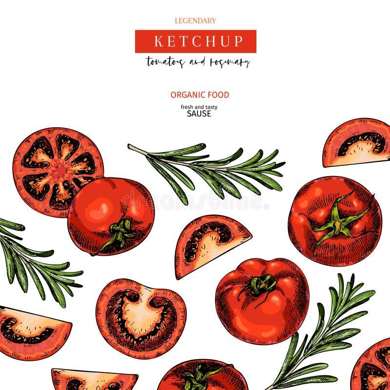 Hand gezeichneter Aufkleber von Tomaten- und Rosmarinketschup sause Vektor farbige Weinlesekunst Satz Bauernhofgemüse organisch lizenzfreie abbildung