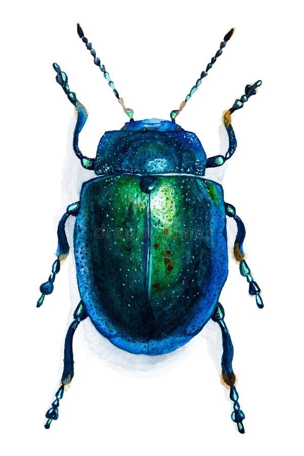 Hand gezeichneter Käfer lokalisiert auf Weiß lizenzfreie stockfotos