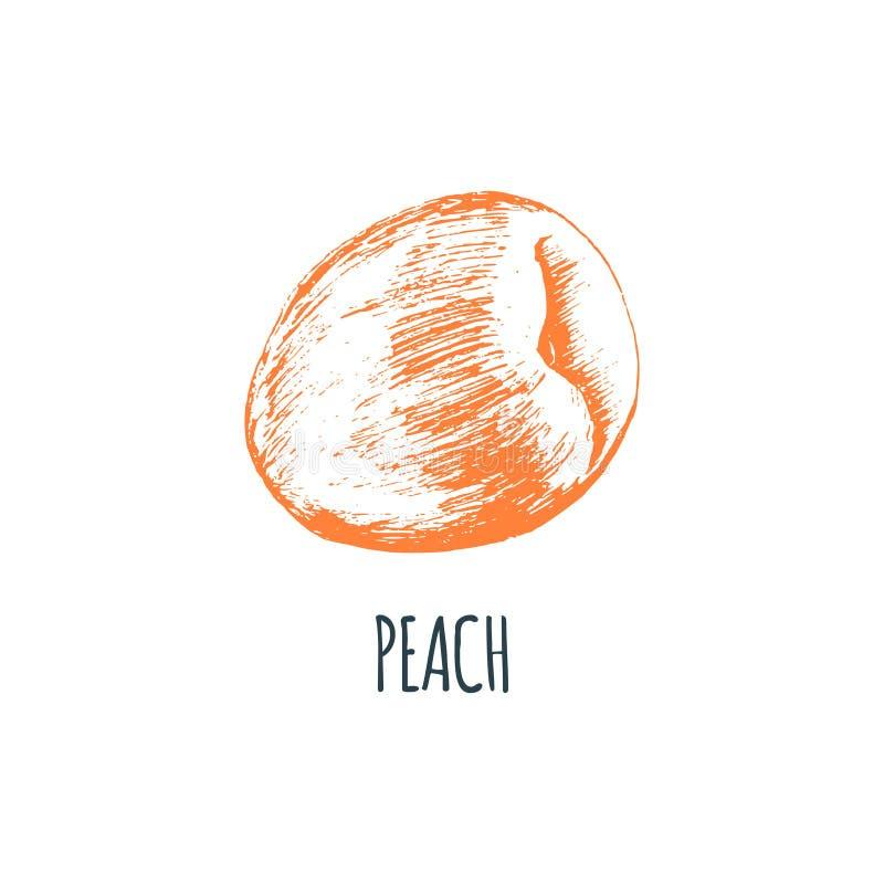 Hand gezeichneter Pfirsich auf weißem Hintergrund Vektorillustration der Frucht Vegetarische Lebensmittelskizze Bauernhofmarktpro lizenzfreie abbildung