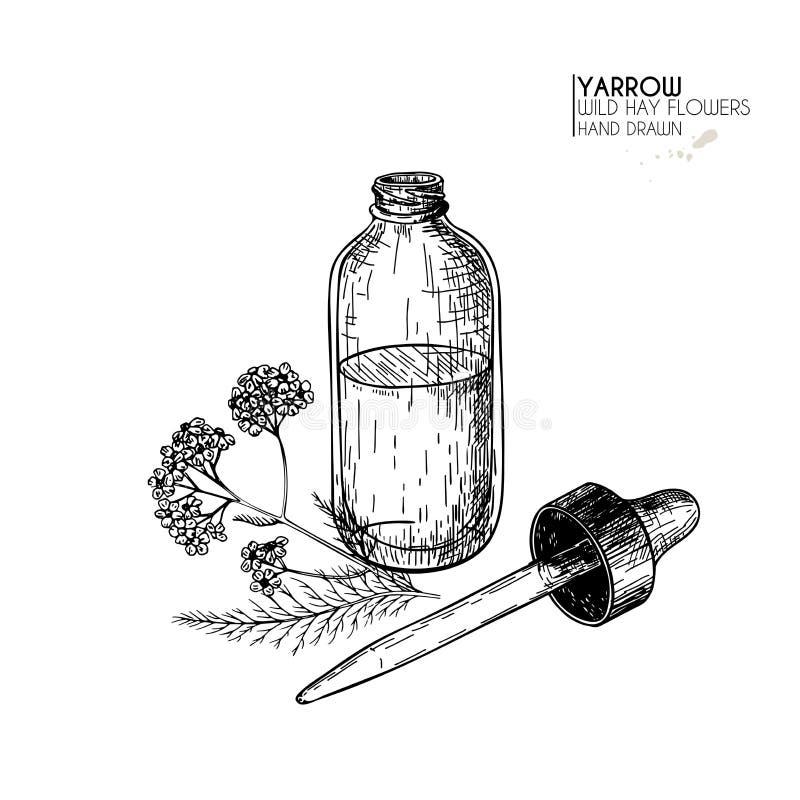 Hand gezeichneter Satz ätherische Öle Garbenblume der Vektorschafgarbe Medizinisches Kraut mit Glastropfflasche Gravierte Kunst vektor abbildung