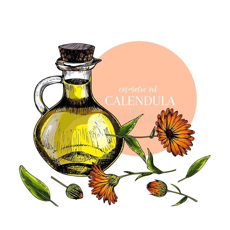 Hand gezeichneter Satz ätherische Öle Vektor farbige Calendulablume Medizinisches Kraut mit Glastropfflasche graviert stock abbildung