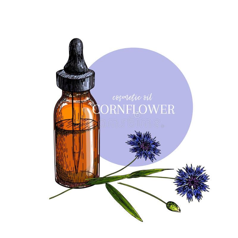 Hand gezeichneter Satz ätherische Öle Vektor farbige Kornblumeblume Medizinisches Kraut mit Glastropfflasche graviert vektor abbildung