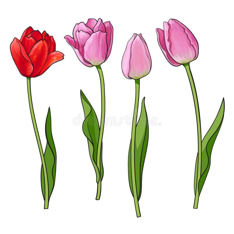Hand gezeichneter Satz der Seitenansicht rot, rosa Tulpenblume stock abbildung